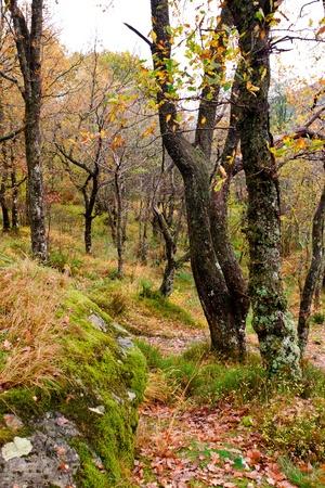 trossachs national park: Enchanted Scottish Forest in autumn (Trossachs National Park) Stock Photo