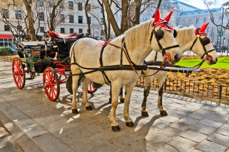 horse drawn carriage: Fiaker horse carriage in Vienna, Austria  no people