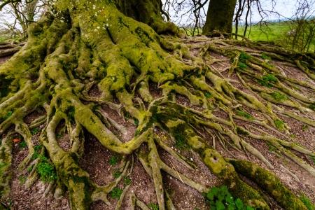 druid: Mystical old druid tree Stock Photo