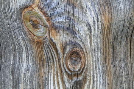 Closeup detail of wooden plank with trunk knot from old branch photo