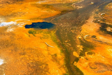 microbial: Microbial mats in geothermal pools, Yellowstone National Park ,Wyoming