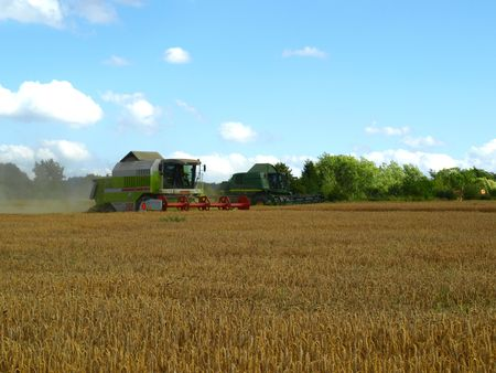 Two harvesters on wheat field