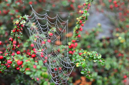 Pearls in the spider web