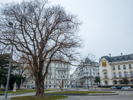 big tree cityscape in winter season , Vienna Austria