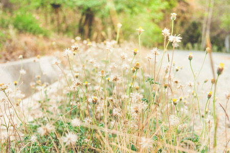 priceless flowers by the road stock photo picture and royalty free