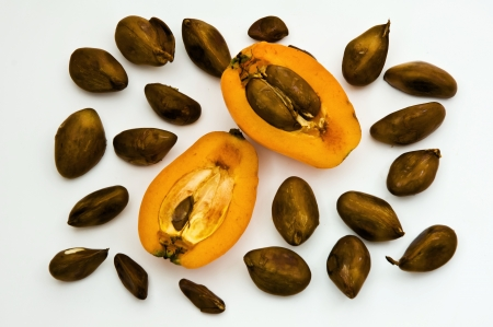 eriobotrya japonica, shesek - delicious and healthy sub-tropical fruits.