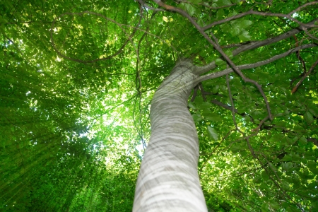 lower view sun rays through the green tree leafs photo