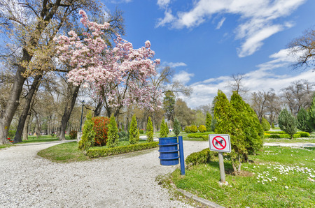 blosom: NO DOGS, spring outdoor park magnolia tree blosom and  colorful grass, trees on bright sky
