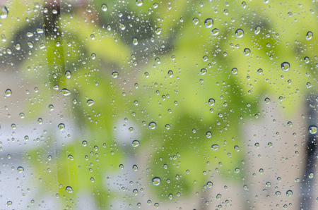 aciculum: beautiful background of rain Drops Flowing Down Window with a blurred green leafs at back