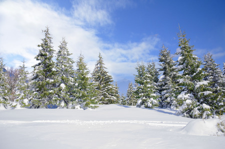 Beautiful winter mountainside landscape with snow covered pine trees and nice blue sky Фото со стока