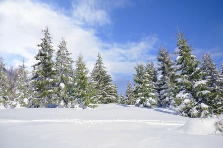 Bellissimo paesaggio montagna d'inverno con la neve coperti alberi di pino e bel cielo blu Archivio Fotografico - 27534457