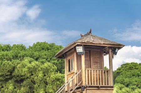 tropical tree: Tropical Casa del �rbol