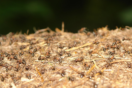 ants nest in the forrest closeup photo
