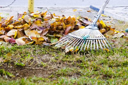 colorful leaves: Raking leaf pile Stock Photo