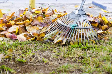 Pile of fall leaves with fan rake on lawn Фото со стока - 38588172
