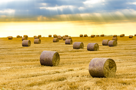 Sunset, sunrise over farm field with hay bales