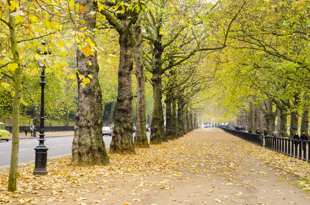 Autumn afternoon in London Hyde Park walkway Stock fotó