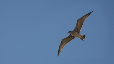 Seagull is flying on the sky Stock Photo