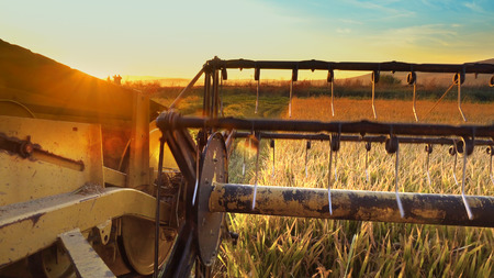 Combine harvesting wheat with a view of sunset and field ahead
