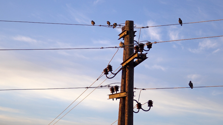 Flycatcher (Muscicapa striata) birds on post with electrical wires against blue sky at sunrise Фото со стока - 120412230