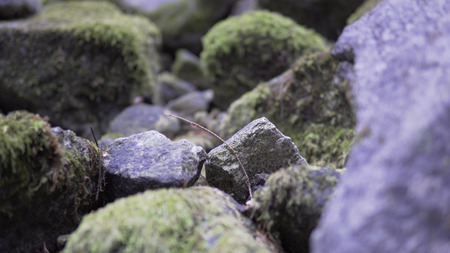 Animal POV moving over Forest Stones With Moss, cinematic dof