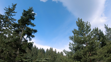 Aerial fly along beautiful pine tree forest in  mountain against spring blue sky Фото со стока - 120419657