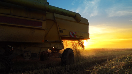 Harvesting combine barley in the field harvesting wheat at sunset, sunrise, cinematic view