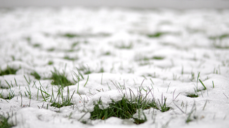 Close-up of spring snow covering formations on a blade of green grass Фото со стока
