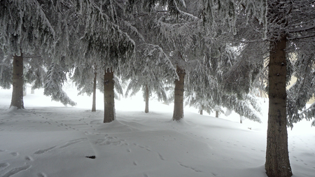 Winter panorama with snow covered trees and fog Фото со стока