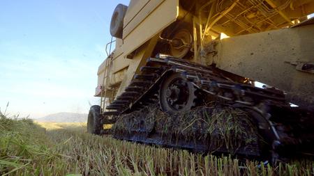 Wheat harvesting shearers Фото со стока - 120639130