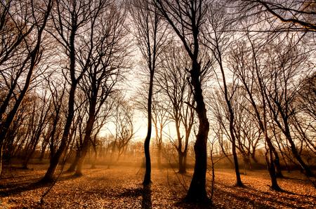 Sunset at the forest Standard-Bild