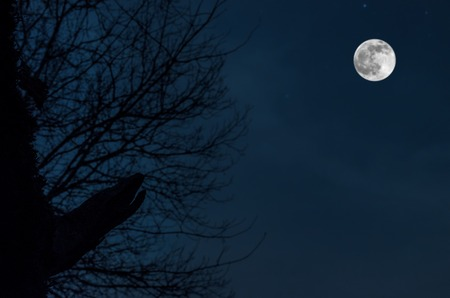 Night mysterious landscape in cold tones, silhouettes of the bare tree branches like werewolf against the full moon on night sky