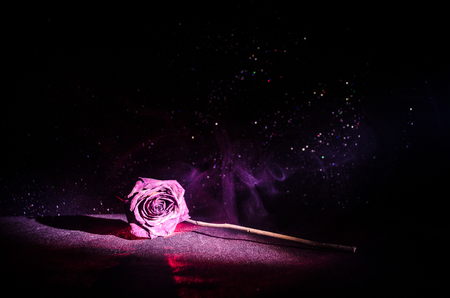 wilting: A wilting rose signifies lost love, divorce, or a bad relationship, dead rose on dark background with smoke Stock Photo
