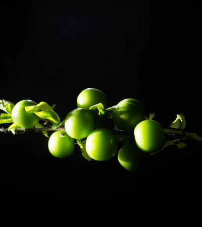 alycha: branch with green cherry plum (Alycha) close up on a dark background with smoke effect