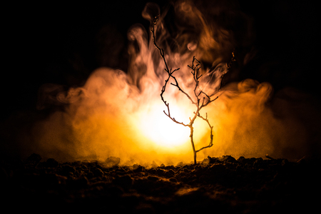 scary night street light in the tree fog, Tree branches on a fire foggy background. Tree decoration Stock Photo