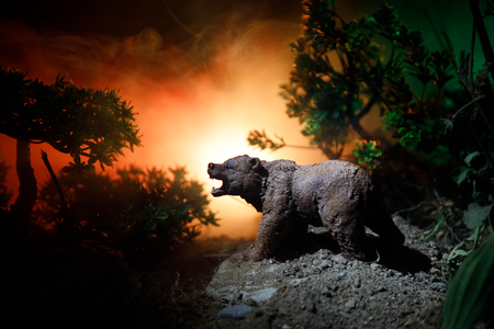 Horror view of big bear in forest at night. Angry bear behind the fire cloudy sky. The silhouette of a bear in foggy forest dark background Stock Photo