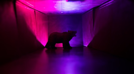 Horror view of big bear in abandoned corridor. The silhouette of a bear in foggy dark toned background. Selective focus