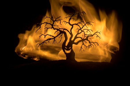 Silhouette of scary Halloween tree with horror face on dark foggy toned fire. Scary horror tree Halloween concept. Selective focus Imagens