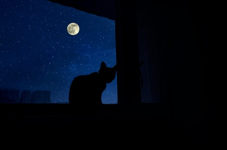 Cat sit by the windowsill in moonlight and looking at full moon. Dark room in the silhouette of a cat sitting on a window at night