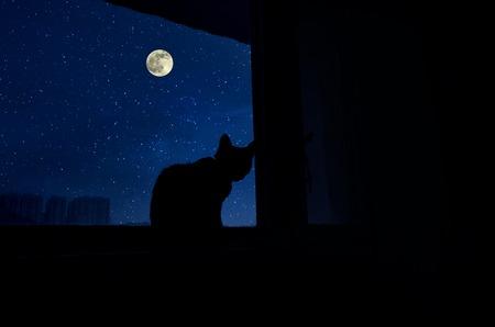 El gato se sienta junto al alféizar de la ventana a la luz de la luna y mira la luna llena. Cuarto oscuro en la silueta de un gato sentado en una ventana por la noche