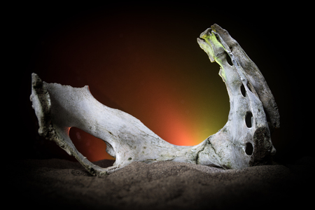 Animal bone in dark Halloween night with fog and light on background  Selective focus and space for text. Abstract horror concept Stock Photo