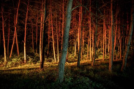 magical lights sparkling in mysterious forest at night. Pine forest with strange light. Long exposure shot Reklamní fotografie - 128832079