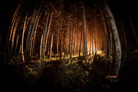 magical lights sparkling in mysterious forest at night. Pine forest with strange light. Long exposure shot Reklamní fotografie - 128832088