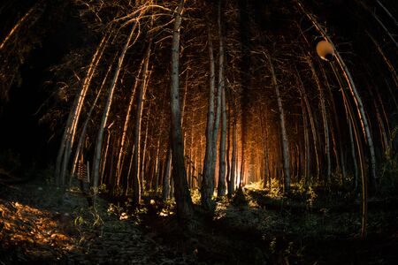magical lights sparkling in mysterious forest at night. Pine forest with strange light. Long exposure shot Reklamní fotografie - 128832133