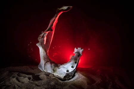 Animal bone in dark Halloween night with fog and light on background  Selective focus and space for text. Abstract horror concept 版權商用圖片