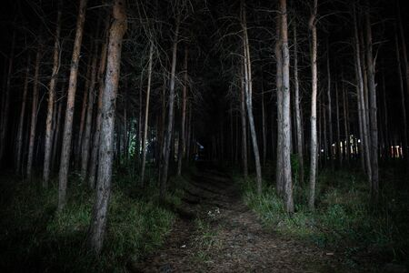 magical lights sparkling in mysterious forest at night. Pine forest with strange light. Long exposure shot Stockfoto