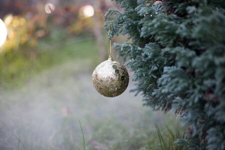 Bauble on tree. Christmas and New Year decoration on the pine tree branch outdoors. Concept of winter holidays. Selective focus