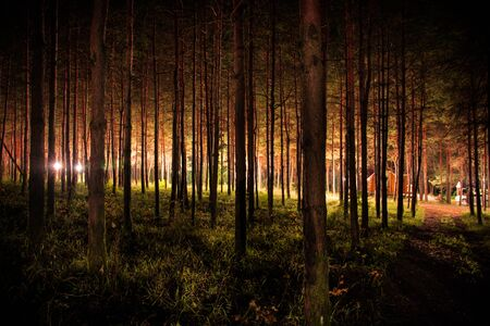 magical lights sparkling in mysterious forest at night. Pine forest with strange light. Long exposure shot Imagens - 128907533
