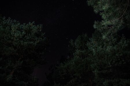 The bright starry sky in the night forest. Long exposure shot 스톡 콘텐츠
