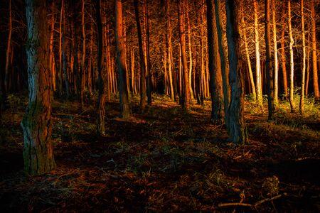magische Lichter, die nachts im mysteriösen Wald funkeln. Kiefernwald mit seltsamem Licht. Langzeitbelichtung
